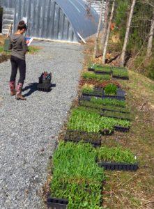 plants arriving 4.3.16