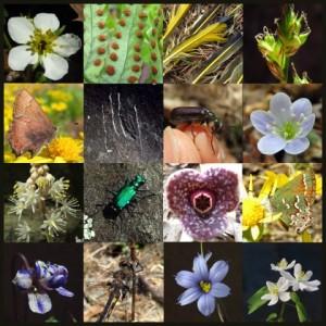 Spring Survey Collage